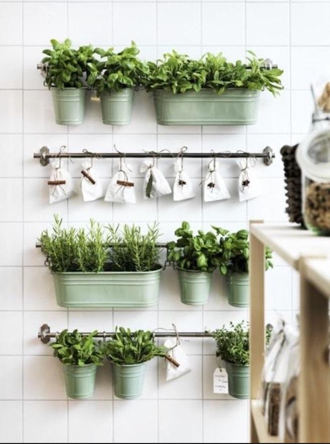 vasinho de ervas na rede da cozinha
