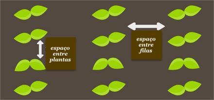 espaço entre plantas e espaço entre filas