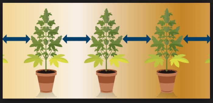 plantas separadas
