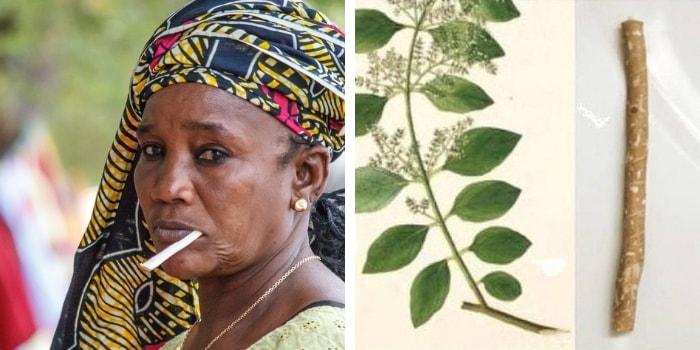 pau de Miswak e africana