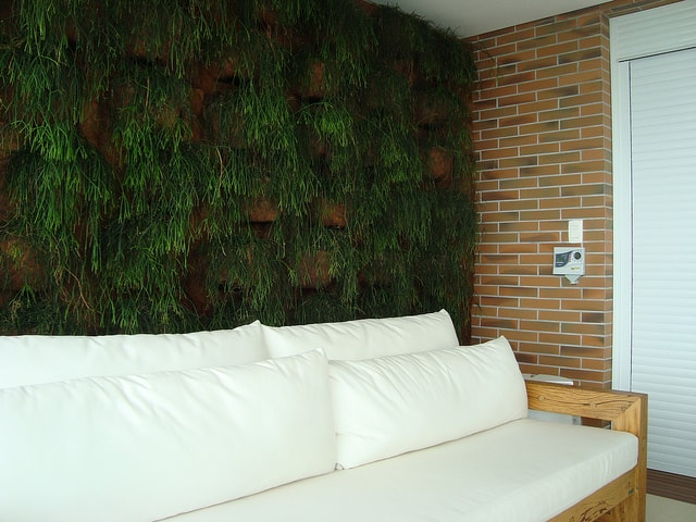 parede inteira com plantas