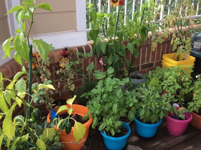 vários vegetais em vasos