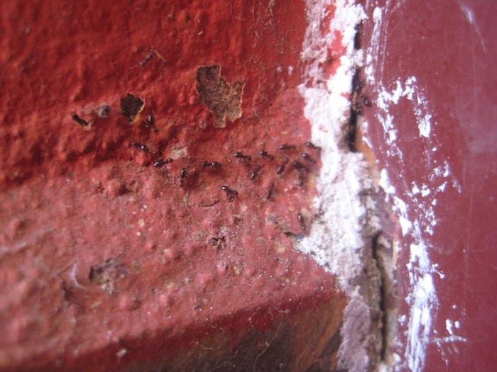 linha de giz bloqueia entrada de formiga
