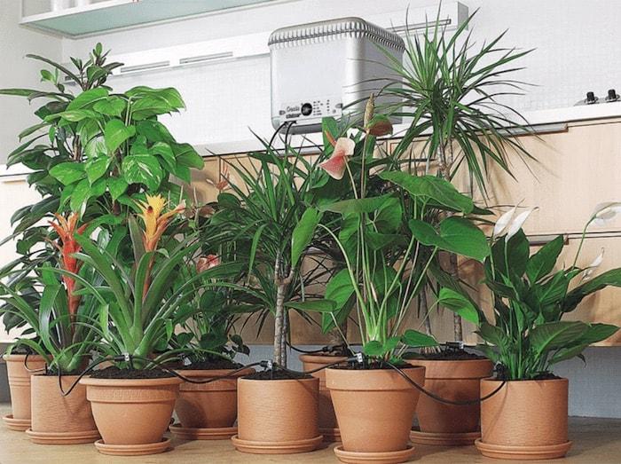 vasos de plantas juntos