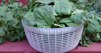 cesta cheia de folhas de espinafres