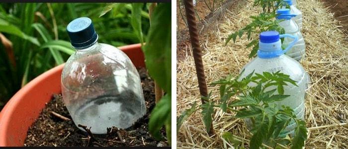 garrafa pet fincada na terra ao lado da planta