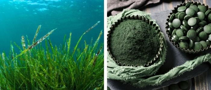 alga spirulina crua em pó e pastilhas