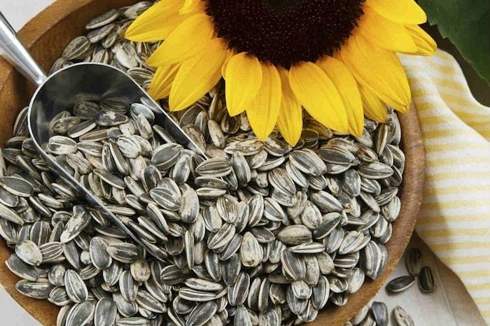 sementes e flor de girassol