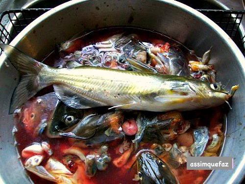 peixe no balde
