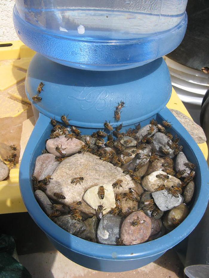 bebedouro para abelhas