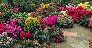jardim de flores todo o ano