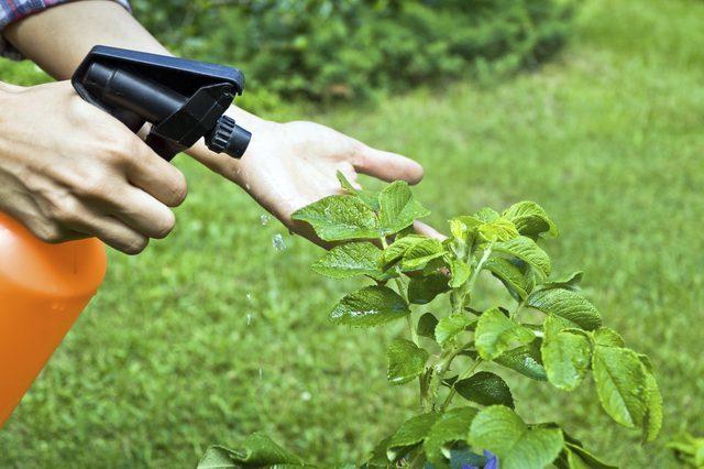 fertilizante liquido caseiro