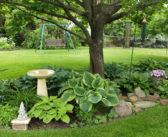 12 plantas/flores que você pode cultivar na sombra