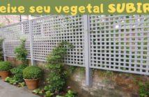 vegetais na treliça