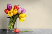tulipa e água
