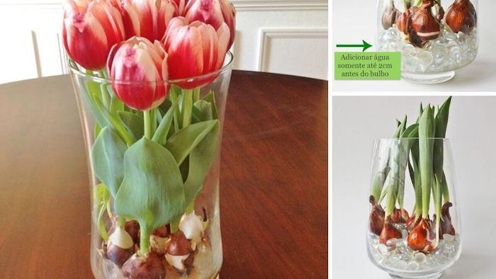 tulipas brotando