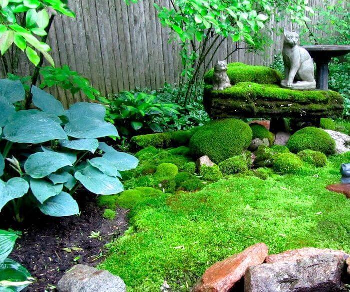 musgo no jardim