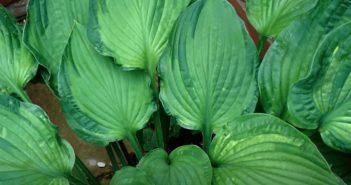 plantas mais verdes