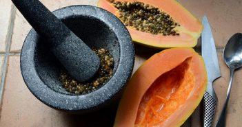 moendo semente de papaya