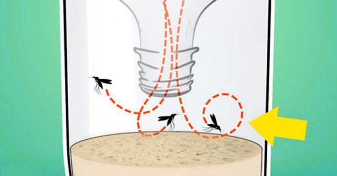moscas e garrafa pet