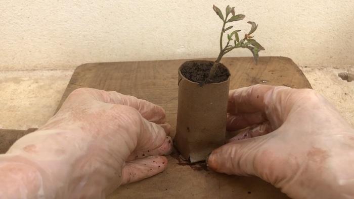 sementeiras rolo papel